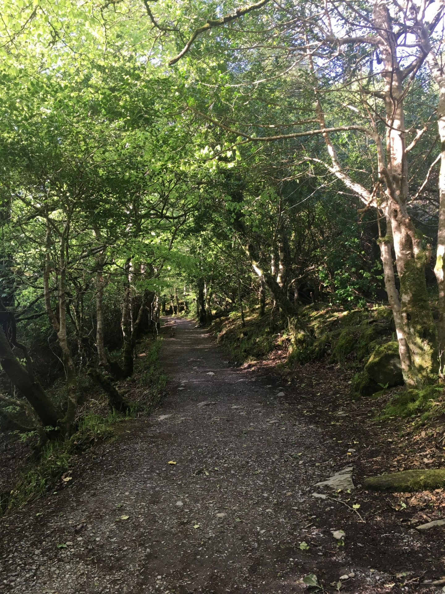 Hike to Torc Waterfall through forest