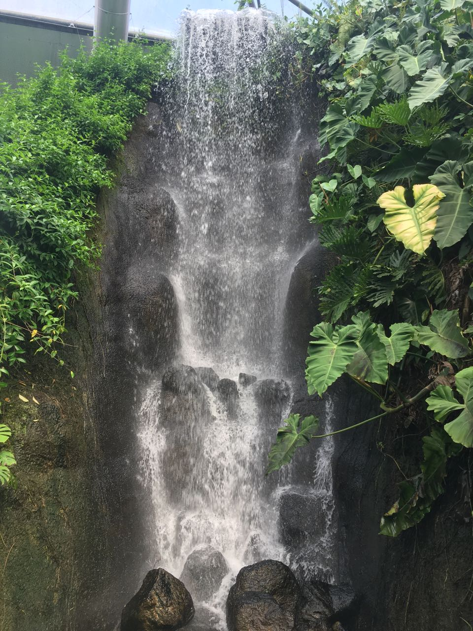 Waterfall inside the Rainforest Biome