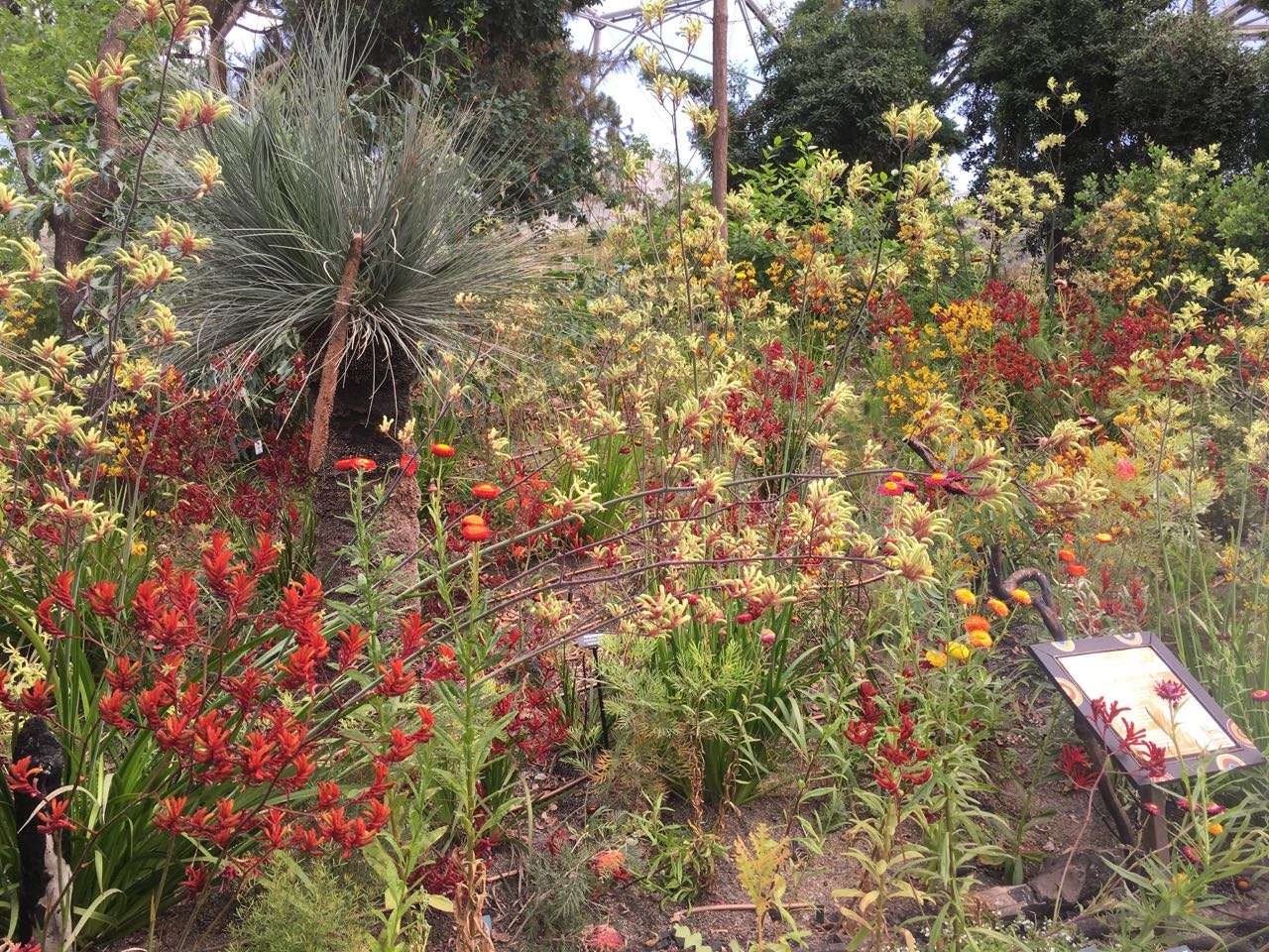 Colourful flowers in the Western Australia Garden