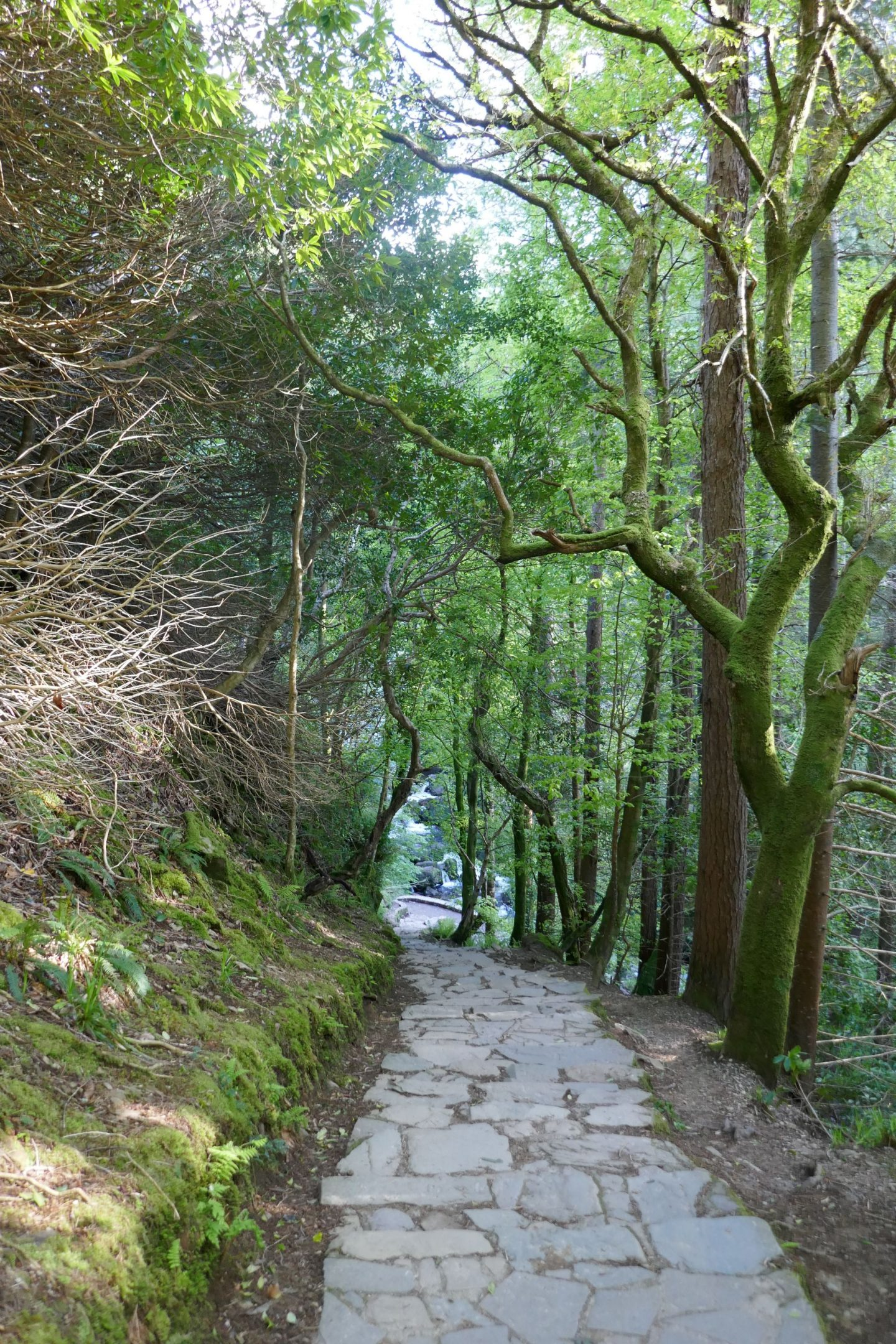 Steps down to Torc Waterfall