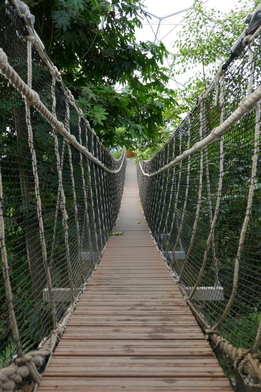 Rope bridge between two tall trees
