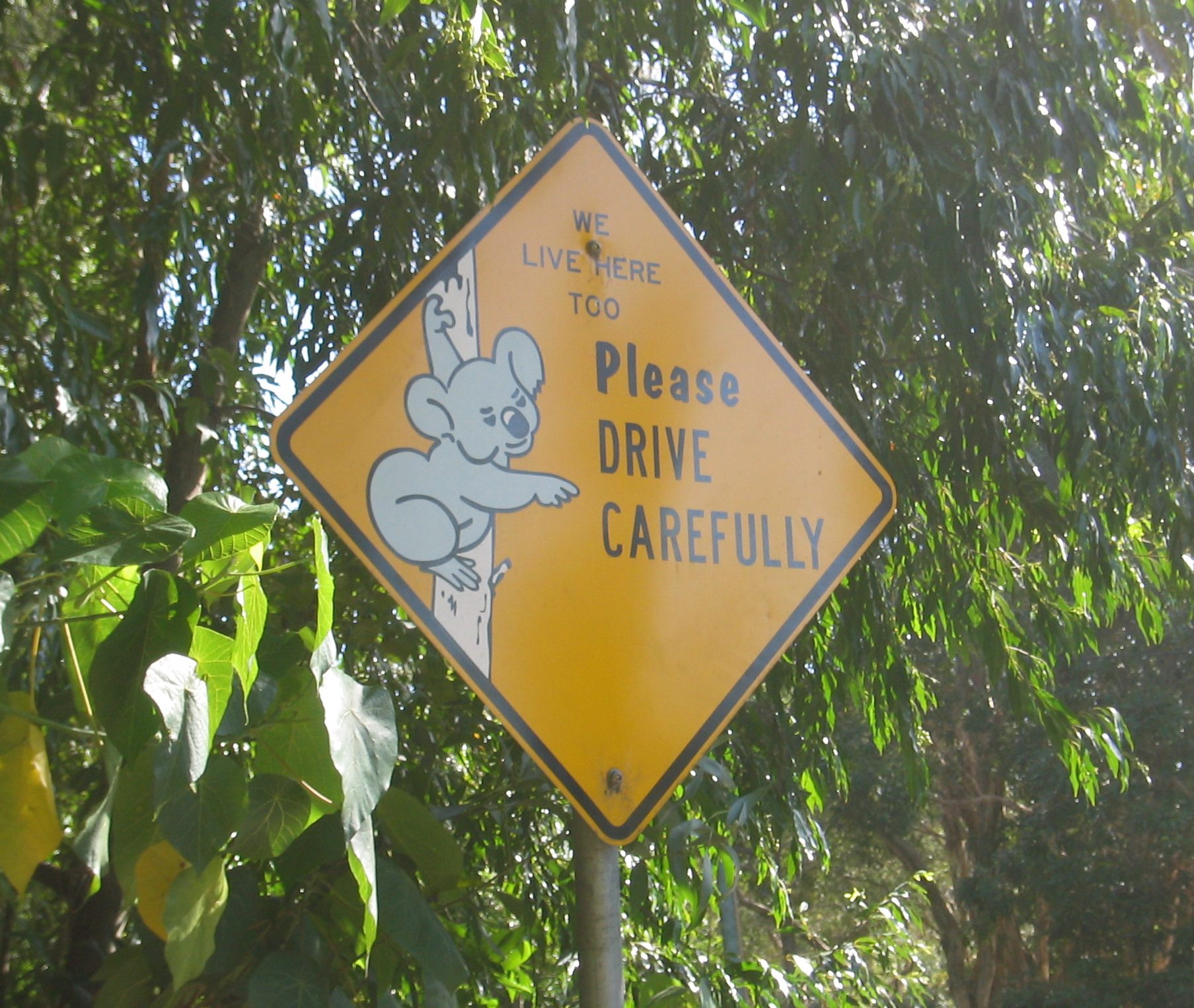 Road sign showing a Koala with the words please drive carefully
