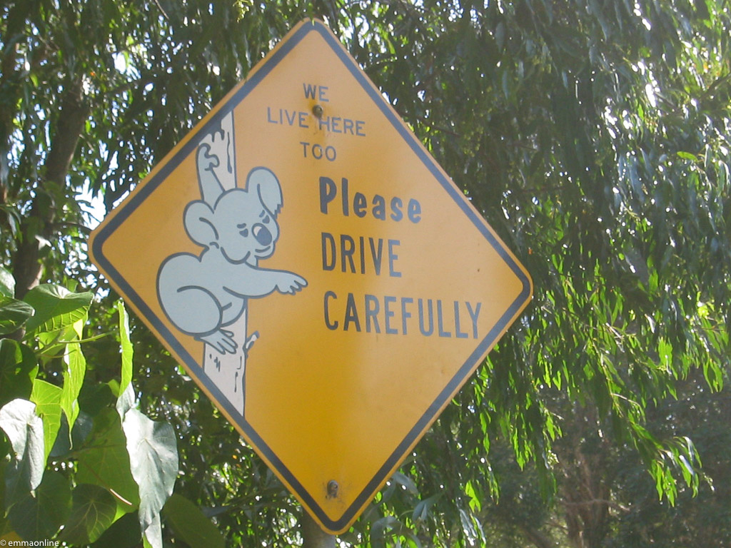 Road sign asking people to drive carefully as Koalas live there too