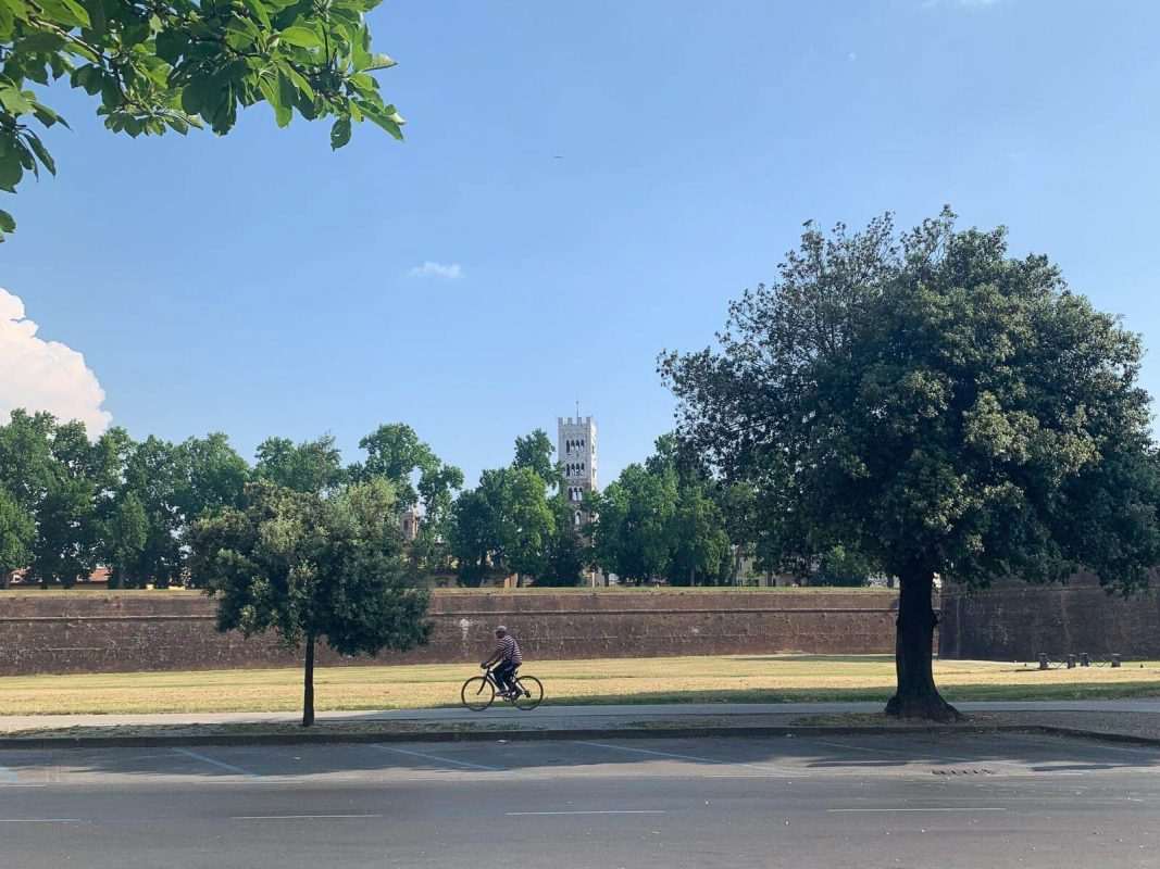 Cyclist passing Lucca's city wall with a tower in the background
