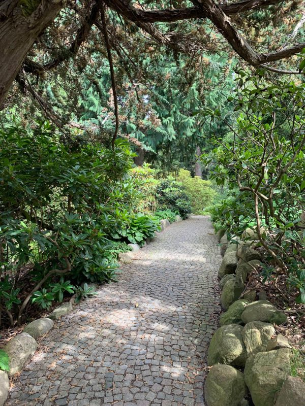 A path overhanging with trees in the Botanical Gardens